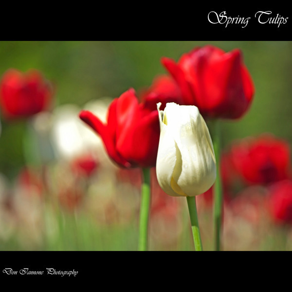 Flowers-146.jpg