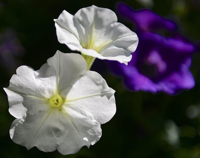 Flowers-157.jpg