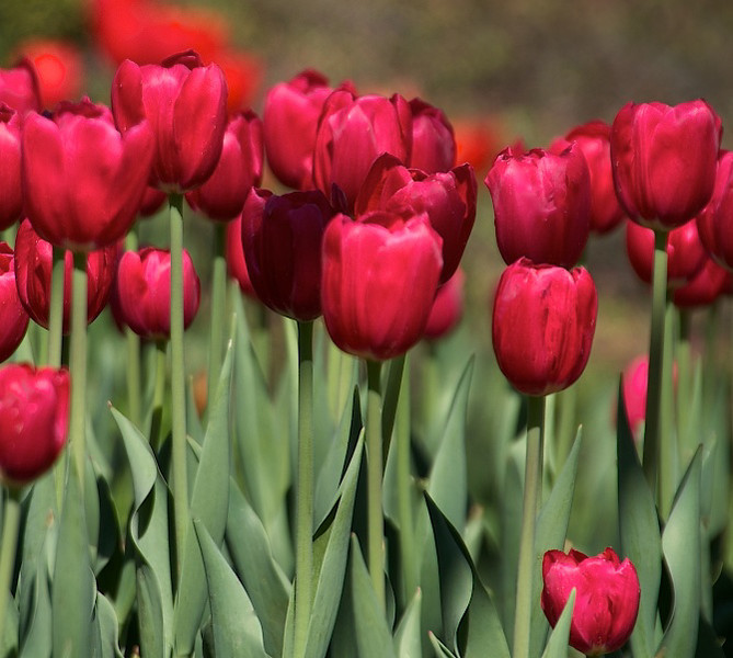 Flowers-89.jpg