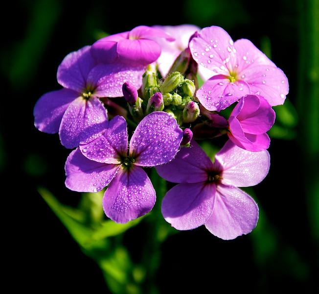 Flowers-107.jpg