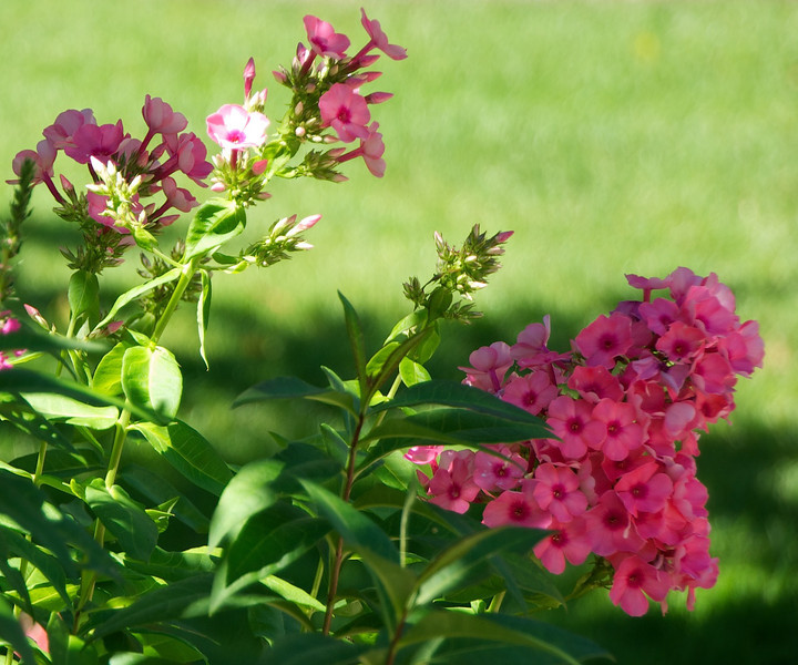 Flowers-36.jpg