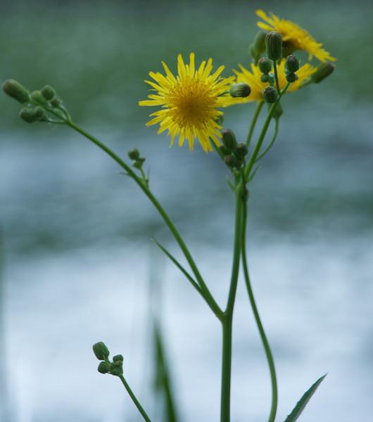 Flowers-43.jpg