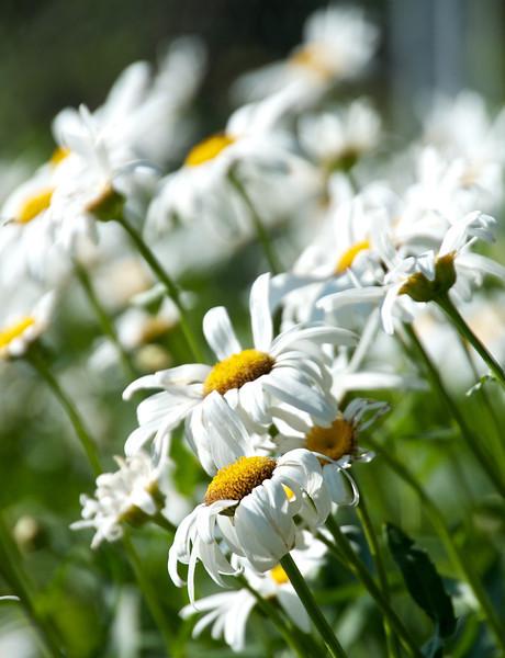Flowers-133.jpg