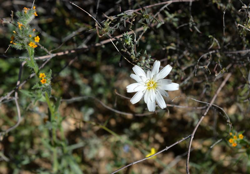 Flowers-171.jpg