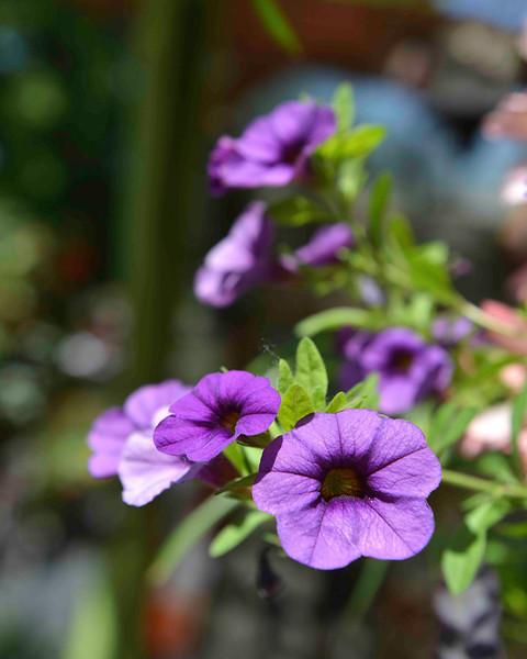Flowers-177.jpg