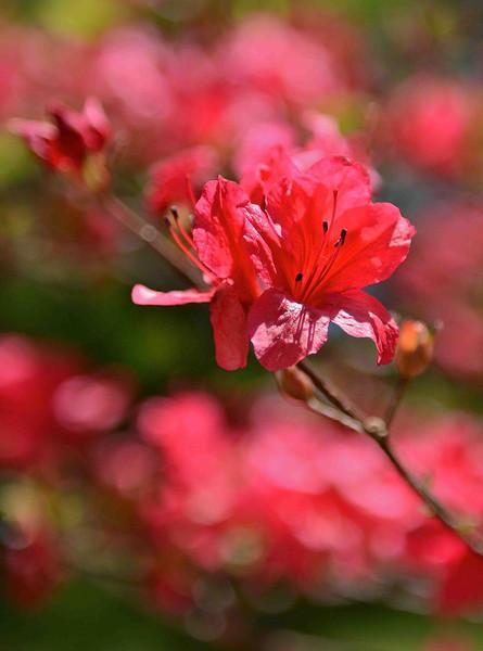 Flowers-155.jpg