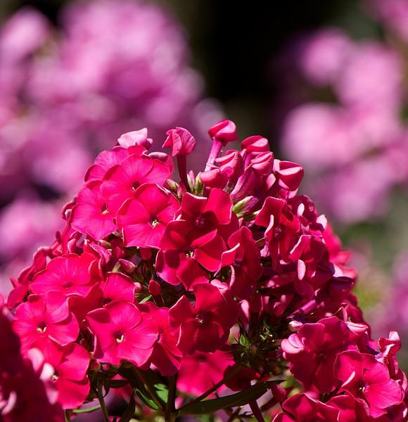 Flowers-37.jpg