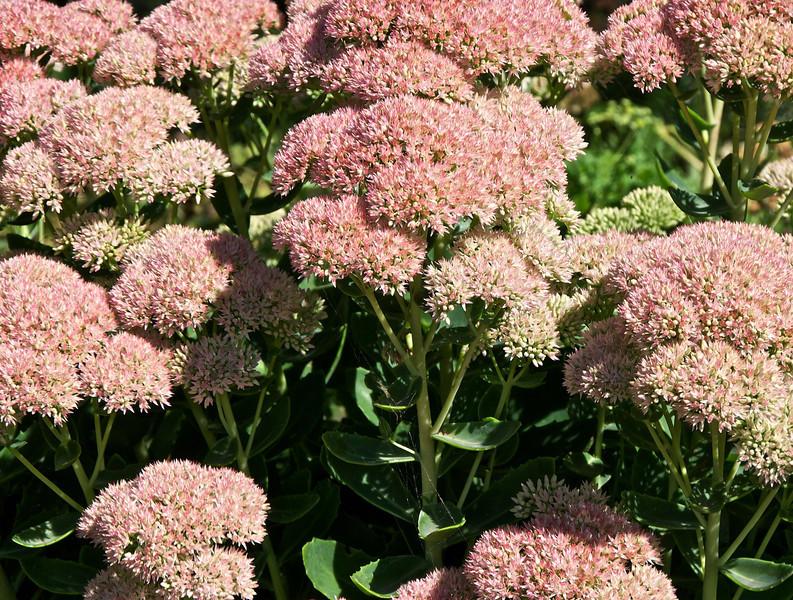 Flowers-58.jpg