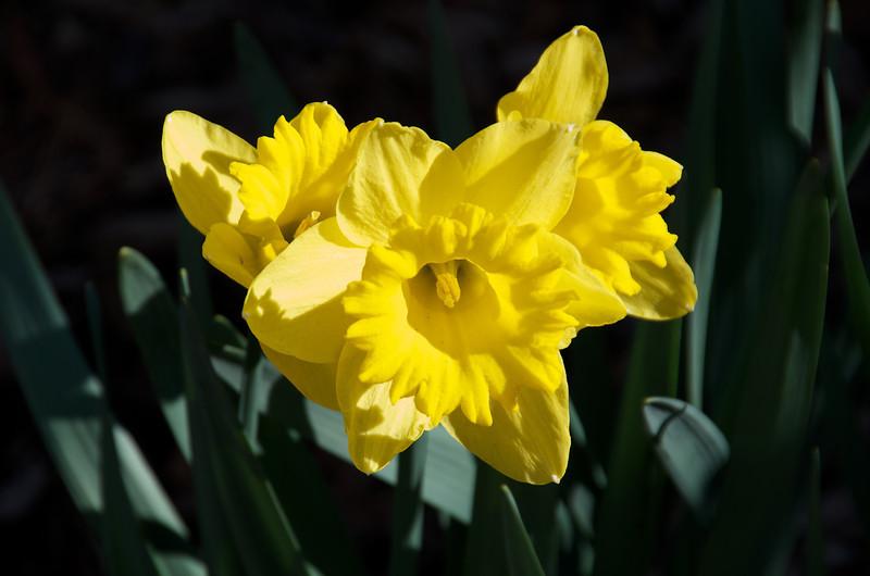 Flowers-74.jpg
