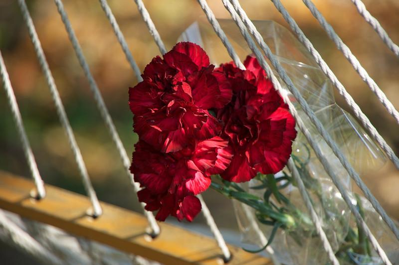 Flowers-62.jpg