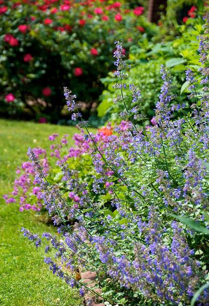 Flowers-126.jpg