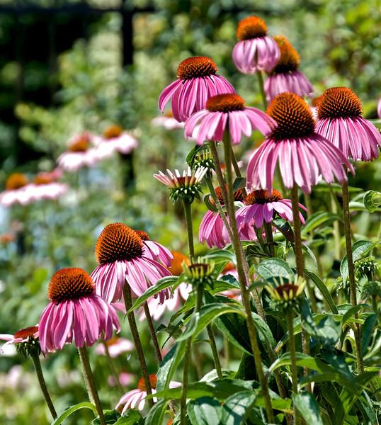 Flowers-141.jpg