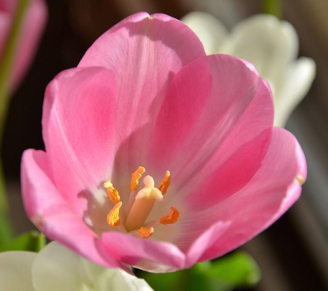 Flowers-68.jpg