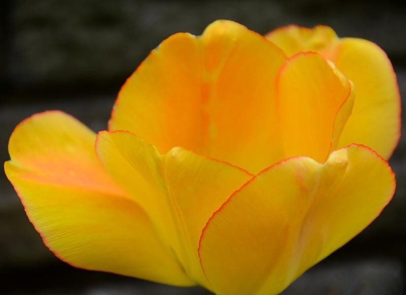 Flowers-98.jpg