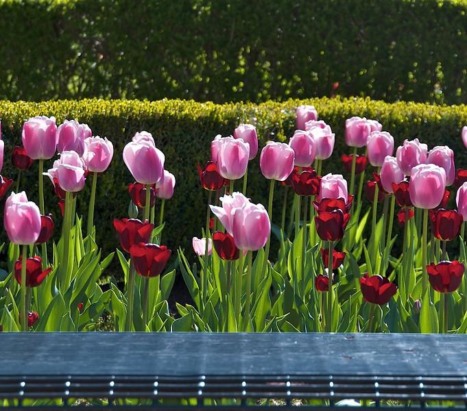 Flowers-91.jpg
