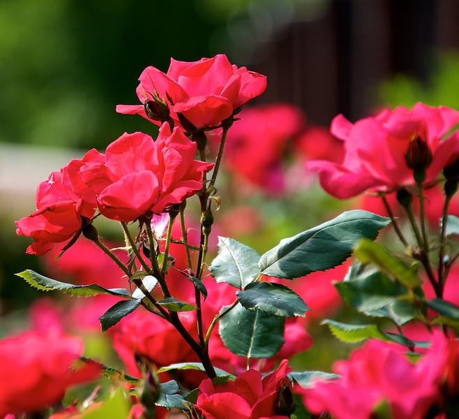 Flowers-127.jpg
