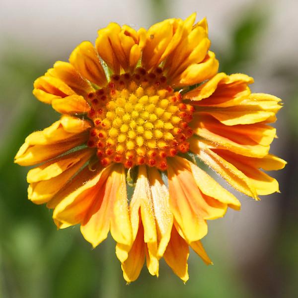 Flowers-124.jpg