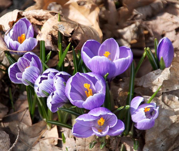 Flowers-66.jpg