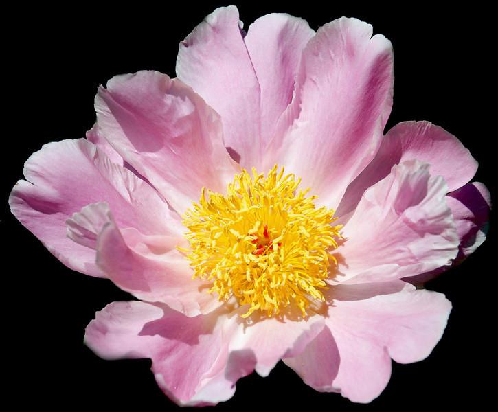 Flowers-122.jpg