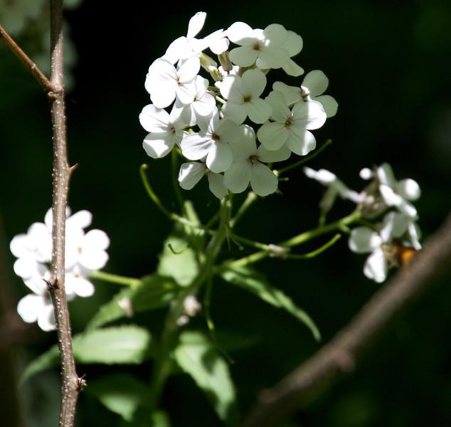 Flowers-119.jpg