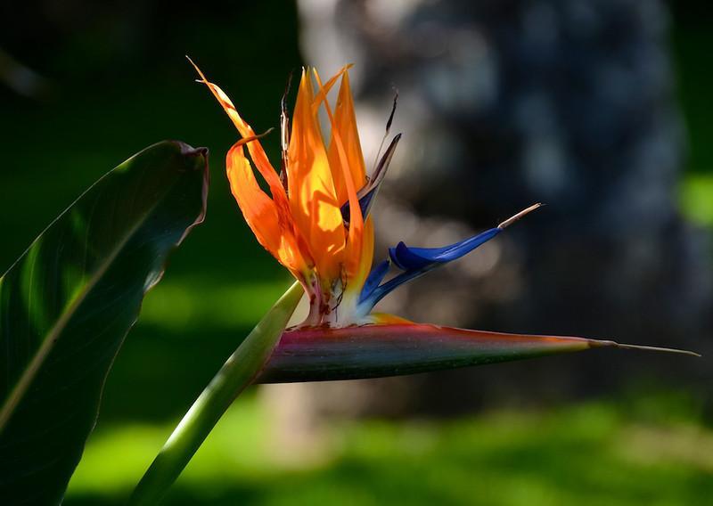 Flowers-148.jpg