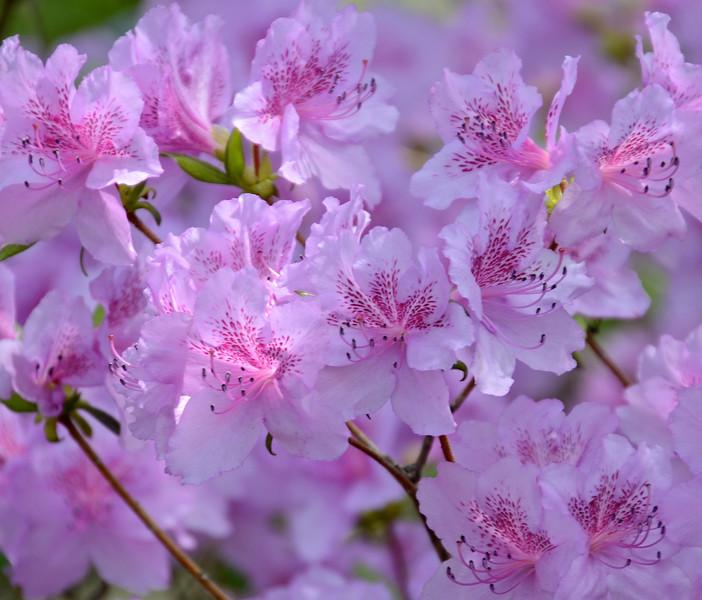 Flowers-106.jpg