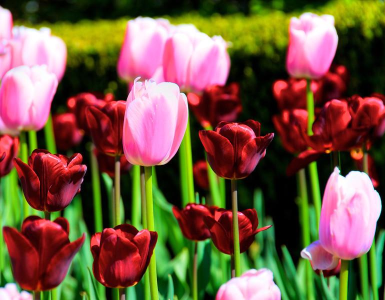 Flowers-93.jpg