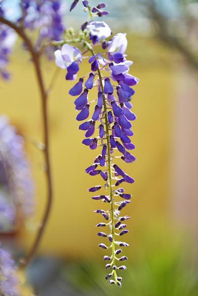 Flowers-170.jpg