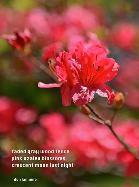 Flowers-156.jpg