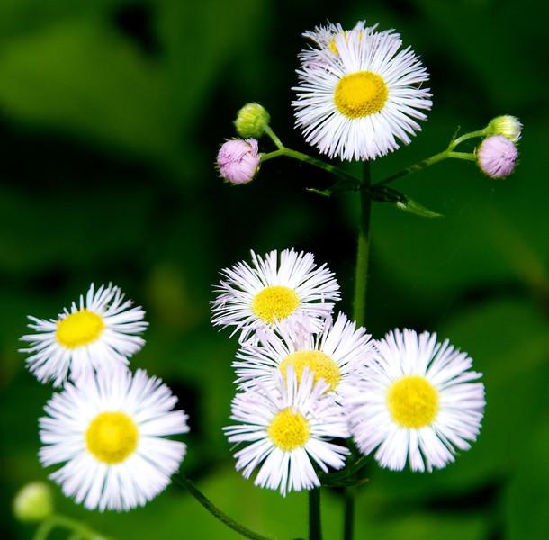 Flowers-118.jpg
