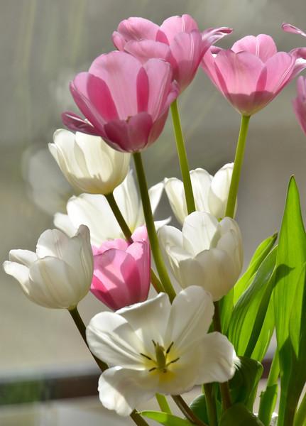 Flowers-71.jpg