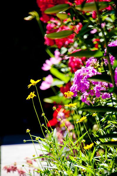 Flowers-41.jpg