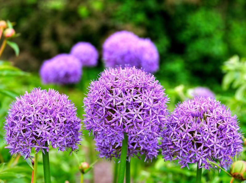 Flowers-109.jpg