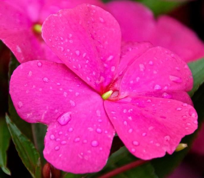 Flowers-129.jpg