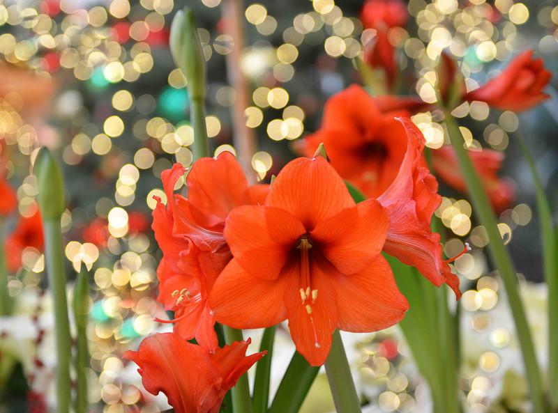 Flowers-162.jpg