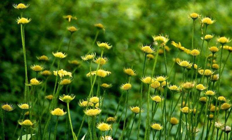 Flowers-111.jpg