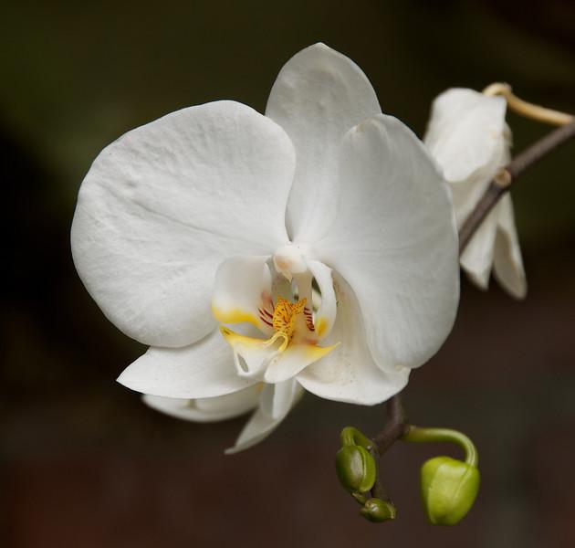 Flowers-63.jpg