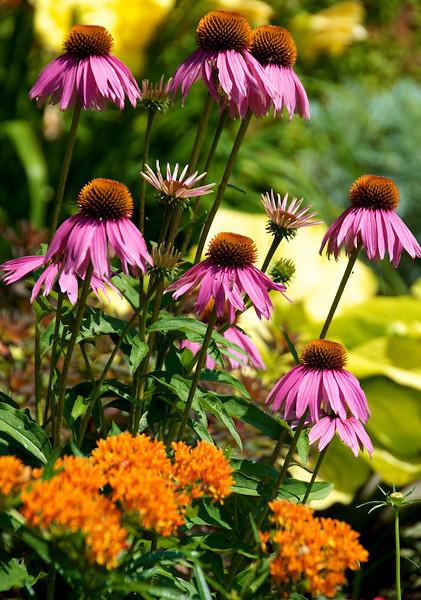 Flowers-138.jpg
