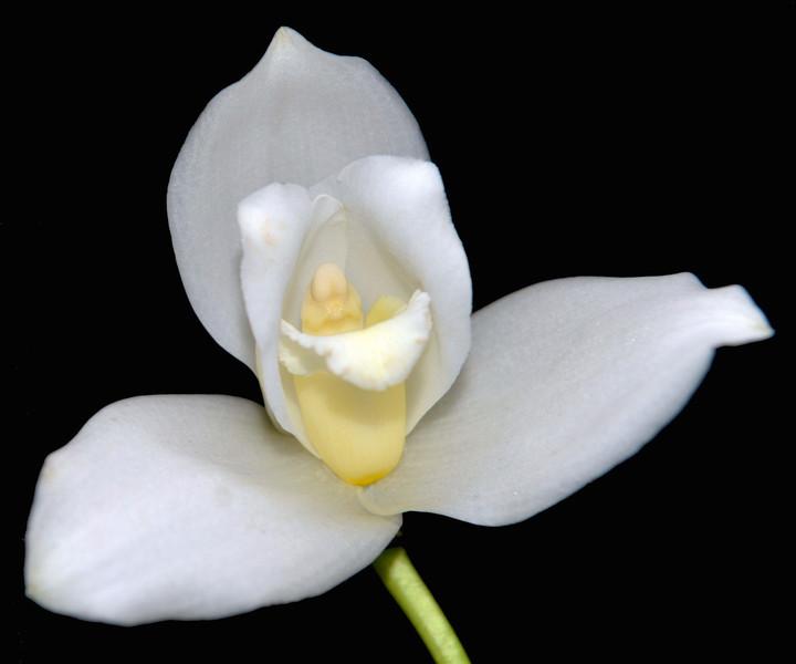 Flowers-164.jpg