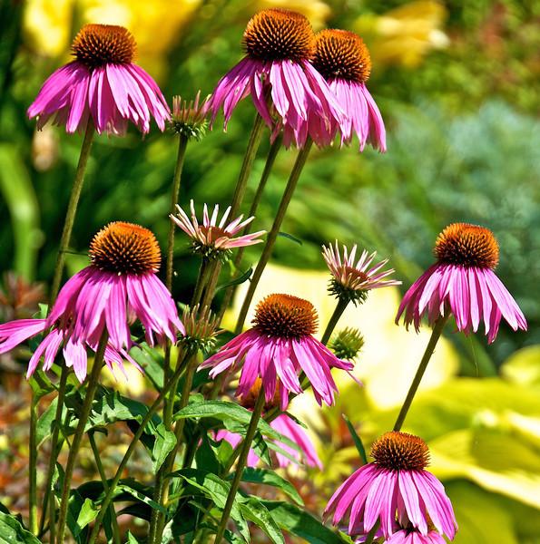 Flowers-137.jpg
