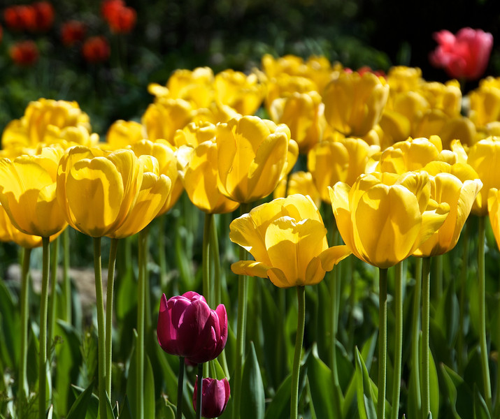 Flowers-96.jpg
