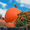 Autumn Pumpkin-Mum Display