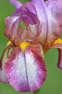 Iris-Confetti