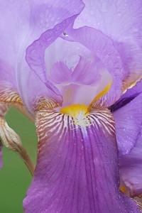Iris-Dejazet