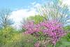 Spring Landscape New Jersey Meadowlands