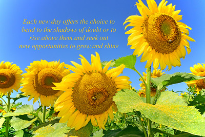 Sunflowers-Rise and Shine Message