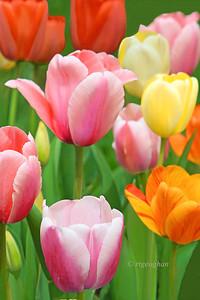 Garden Tulips Jewels