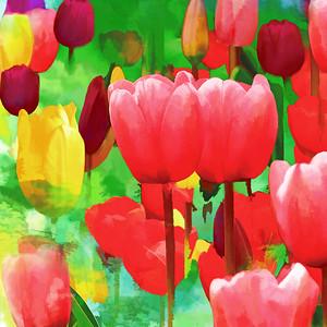 Tulip Garden Fantasy Squared II