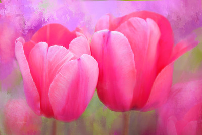 Garden Tulips Painted