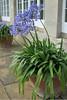 FL 109 Ouside Belton Orangery
